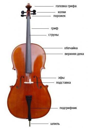 structura-violoncheli